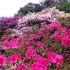 [久留米]森林つつじ公園で色とりどりに咲き誇るツツジたちに囲まれたら心身ともに癒された